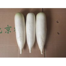 Competitive Price White Radish (250-300g)