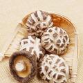 Champignon Shiitake à fleurs blanches séchées à bas prix