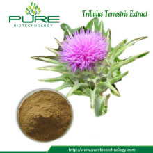 Tribulus Terrestris Fruit Extract Powder 40% 90% Saponins
