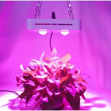 Wachsende Lampen LED Grow Light 300W AC85-265V