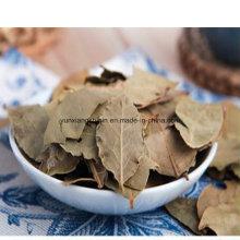 Folhas de louro secas ao ar