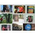 Peinture de marquage d'arbre, Spray de marqueur d'arbre 400ml / 500ml