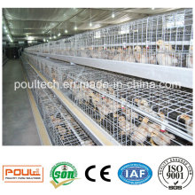 Pullet Cage for One Week Young Chicks