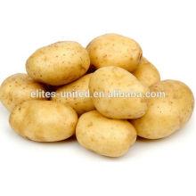 Fresh Potato from China