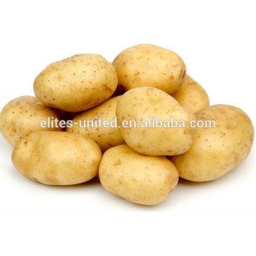 Chinese organic fresh sweet potato