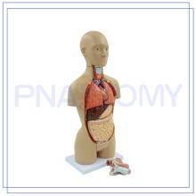 PNT-0322 Torso feminino de equipamentos médicos para uso médico