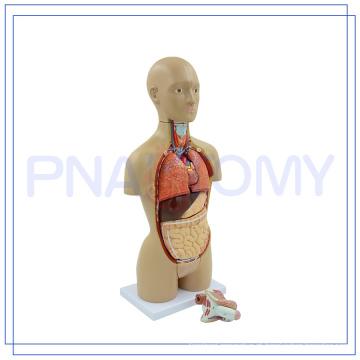 PNT-0322 venda Quente 16 peças modelo de tronco humano
