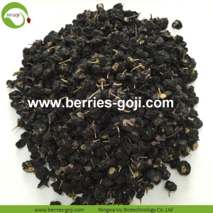 Factory Hot Sale Torkad Wild Black Wolfberry