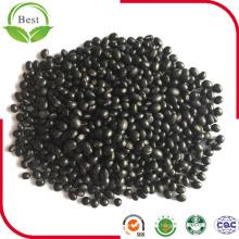 Polvo de soja negra orgánica no en polvo de soja Polvo de soja
