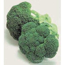 brocoli chinois