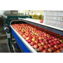 Fruit/ Apple/ Pear/Mango/ Orange Juice Production Line