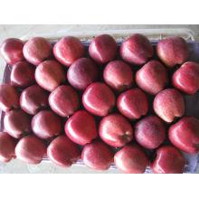 Nueva cosecha de manzana fresca fruta huniu