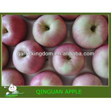 Verkaufe China qinguan Apfel Bruder Königreich