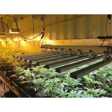 800W Bloom Booster Grow Lights Streifen