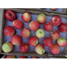 Exportieren Sie frische Gala Apple aus China