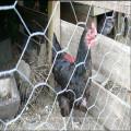 Hähnchen Drahtgeflecht Kaninchen Zaun grün PVC Mantel Stahl Garten Netting