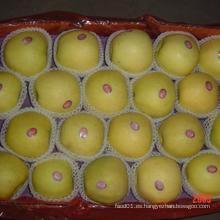 2015 Nueva Exportación de Cultivos Standerd Golden Apple