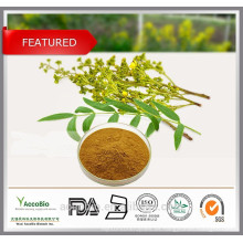 Polvo orgánico certificado de alta calidad del extracto de la hoja del sen del 100% natural