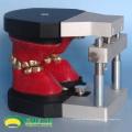 DENTAL06 (12565) Dental Ortodontia Dentes Modelos Typodont