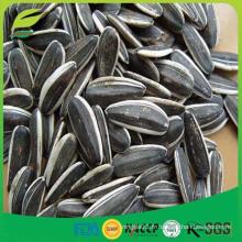 Prix des graines de tournesol chinoises en coquille