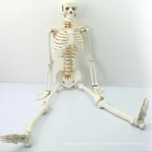 SKELETON05 (12365) modèle médical d'anatomie squelettique du milieu avec le nerf spinal, modèle de squelette de 85cm, meilleur cadeau pour le docteur