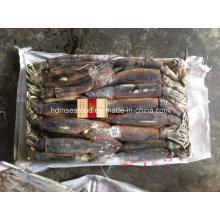 Морепродукты высокого качества Замороженная рыба Аргентина Кальмар