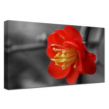 Dessins de peinture en fleurs rouges enveloppés par la galerie