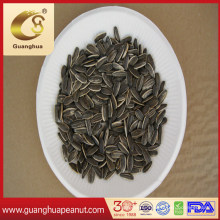 Healthy and Delicious Sunflower Seeds