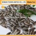 Sunflower Seeds Europe Buyer