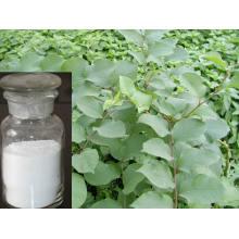 Resveratrol Polygonum Cuspidatum Root Extract