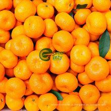 Doce laranja de umbigo primeira qualidade