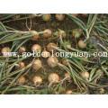 Chinese Fresh Yellow Onion