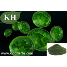 High Natural Protein 50% Chlorella Extract