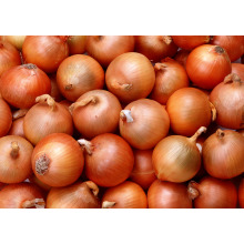 New Crop Fresh Onion Top Quality Onion