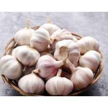 Chines Холодное хранение New Purple Garlic