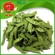 Yunnan De alta calidad fresca de guisantes de nieve (guisantes verdes congelados)