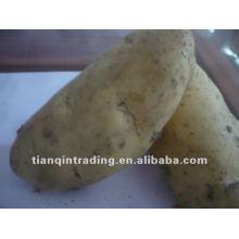 Hochwertige Kartoffel zum Verkauf
