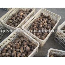 top chinese fresh big taro root 60g