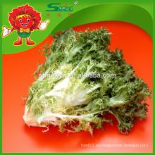 Lechuga con hojas largas lechuga de alto grado a la venta