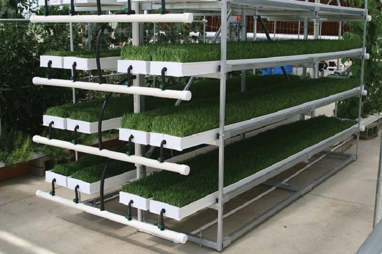 Hydroponic Fodder ProFeed Growing System1
