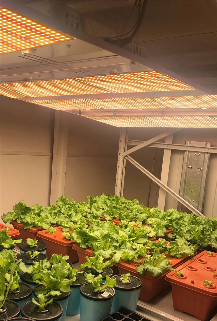 Best Quantum Board Grow Light