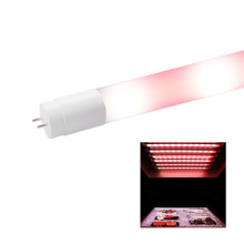 Red LED Tube for Fish Made of Milky Glass