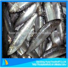yummy frozen sardine fish fresh seafood for sale