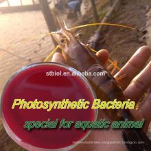 PHOTOSYNTHETIC BACTERIA (PSB)/feed additives/FEED PROBIOTICS