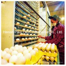 Automatische Ei-Sammelmaschine