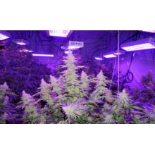 LED Plant Grow Light Vegetables Herbs Bonsai Lamp