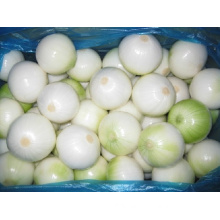 Good Quality Red Onion (8cm and up)