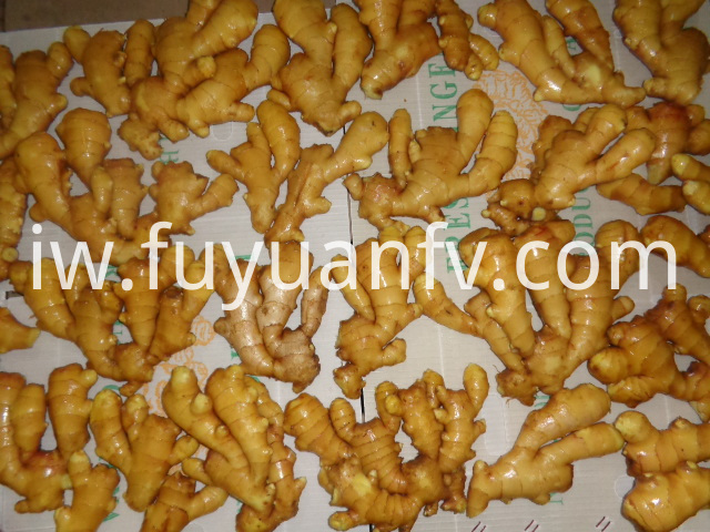ginger fresh from China
