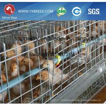 Galvanisierter Junghuhn-Hühnerkäfig
