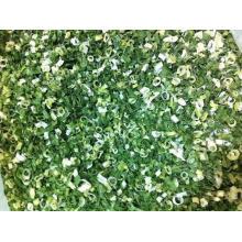 Scallion verde secado al aire; Scallion verde deshidratado